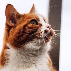 #mycat #Kater Paulchen #liebsterkater #catsruletheworld #catsofinstagram #catstagram #catseverywhere #lovecat #meow #katt #ig_cat #catstruenature #paolo #catoftheday #catwalk #cat #catslovers #katzenleben #catsofworld #mypet #petsagram #lieblingskater #