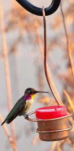 This is my favorite hummingbird feeder ever... Perfect size, easy to clean, and keeps the bees out :)