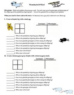 Monohybrid Cross Worksheet | Genetics, Worksheets and Students