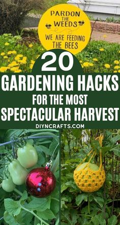20 Clever Gardening Hacks for a Spectacular Harvest - Really good ideas!