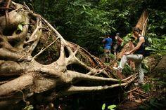 Trek through the pristine primary rainforests of Costa Rica