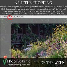 #Photography #TipOfTheWeek A Little Cropping | http://photobotanic.com/todays-tip-a-little-cropping