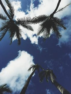 Looking up at the Summer Sky | Paradise | Naples Inspired | Naples, Florida