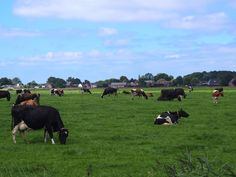 landschap nabij Houwerzijl. gr,