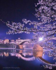 岩国 錦帯橋 Cherry Blossom, Iwakuni, Japan #桜 #CherryBlossom