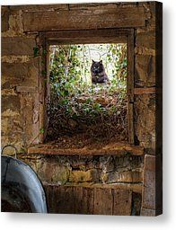 The Barn Cat Photograph by Ron  McGinnis - The Barn Cat Fine Art Prints