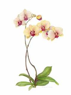 """""""Orchids"""", watercolor Renate Collins Hume"""