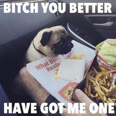 Pug Puppies - Follow Dog Quotes.