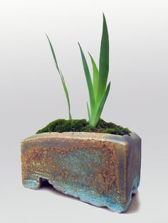 Ron Lang's small irregular bonsai container, distressed foot, sea foam green glaze, rises and moss. In the 2014 November issue of Ceramics Monthly Ron Lang discusses bonsai containers. http://ceramicartsdaily.org/ceramics-monthly/ceramics-monthly-november-2014/