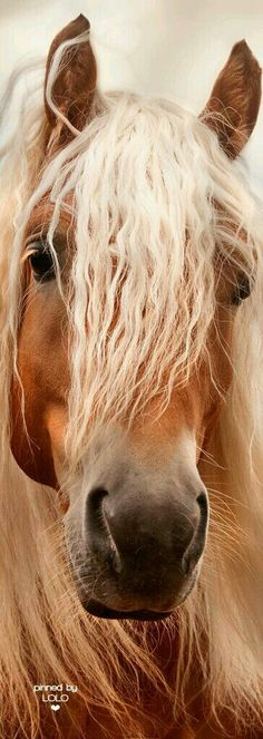 Pretty horse eyes and mane having a good hair day.