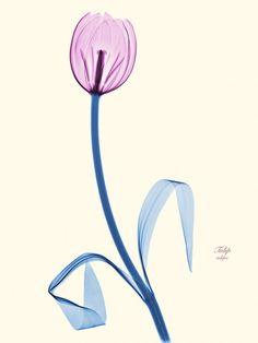 Brendan Fitzpatrick's Floral X-rays