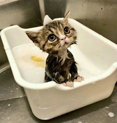 Cute Animals Pictures And Videos underneath Cutest Baby Kitten Pictures Funny Cats In Water, Funny Cute Cats, Cute Kittens, Funny Cats And Dogs, Cats And Kittens, Fun Funny, Bengal Kittens, Kittens Cutest Baby, Daily Funny