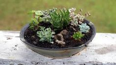 Image result for pinterest succulents in garden