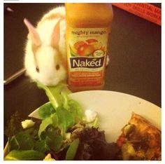 Salad thief