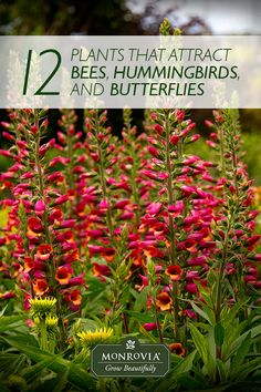 What to Plant to Attract Butterflies, Hummingbirds and Other Pollinators. One out of every three bites of your food depends on a pollinator, so rolling out the welcome mat and ringing the dinner bell for pollinators by planting varieties they'll love is just plain smart.