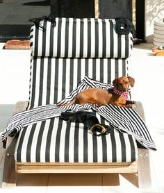 Such a cute doxie!