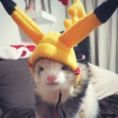 Looking for information about ferret costumes idea? Here are 11 of the best ferret costumes we've seen so far Ferrets Care, Baby Ferrets, Funny Ferrets, Pet Ferret, Cute Little Animals, Cute Funny Animals, Last Minute Halloween Costumes, Halloween Makeup, Exotic Pets