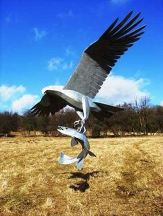 Steel Birds of Prey/ Raptors #sculpture by #sculptor Tim Roper titled: 'Sea Eagle with Salmon. (Flying with its Fish Prey statue)' £1850 #art