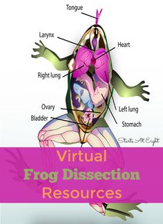 Virtual Frog Dissect