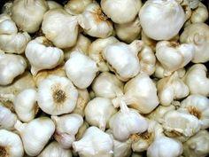 Garlic Control