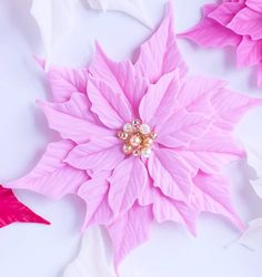 Pink  Pointsetta