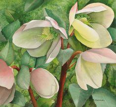 "Contemporary Painting - ""Ivory Prince Helleborus Walhelivor"" (Original Art from Marcy Lansman)"