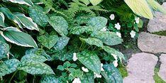 Best Perennials, Shade Perennials, Flowers Perennials, Shade Plants, Cool Plants, Landscaping Around Deck, Landscaping Plants, Landscaping Borders, Landscaping Rocks