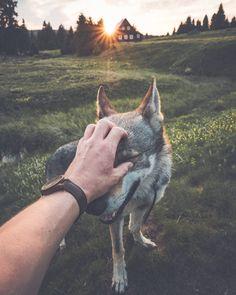 dog care,dog stuff,dog tips,dog training,dog hacks Animals And Pets, Cute Animals, Australian Shepherd Dogs, Dog Rooms, Golden Retriever, Photos Voyages, Boy Dog, Photo Couple, Dog Photography