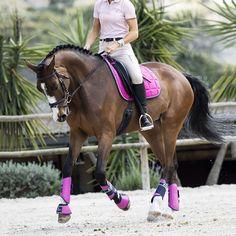 Colorful horse equipment from Fairfield. #hööks
