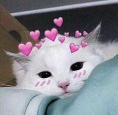 Cauuute kittens cutest, dog cat, cat hug, i love cats, cute cats Cute Baby Cats, Cute Kittens, Cute Baby Animals, Cute Cat Memes, Cute Love Memes, Meme Chat, Cat Hug, Dog Cat, Cute Cat Wallpaper