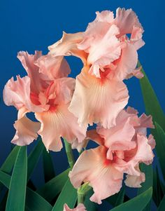 """Magical Encounter 