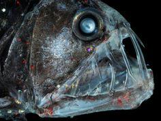 Deze vissen wil je niet tegenkomen | WTF.nl - Blijf je verbazen