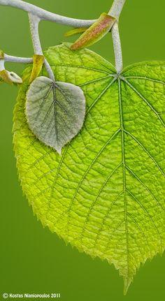 Green Feeling  by Kostas Nianiopoulos, via 500px