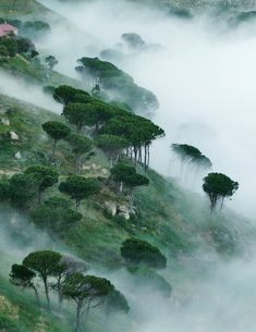 Misty slopes of Table Mountain - Cape Town