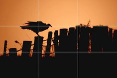 Photography Tips - Rule of Thirds Rule Of Thirds Photography, Photography Terms, Photography For Beginners, Photography Tutorials, Rule Of Thirds Examples, Photo Composition, Photography Composition, Rule Of Three, Pinterest Photography