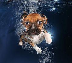 Ava, a 6-week-old beagle mix, swimming.