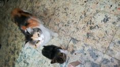 Mother Cat Looking After Her Kitty , kitties are really cute and they are adorable to play and have fun with them , In this video My fofa cat teaching her ki. Healthy Milk, Cat Work, Mother Cat, Have Fun, Kitty, Cats, Animals, Cute, Cuddle Cat