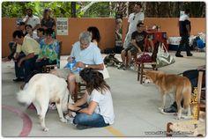 1° encontro de primavera Akita Inu Brasil, realizado pelo canil Yucatán BR ( www.akitainubrasil.com.br ). Com participação de varios akitas.