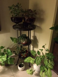 Plants corner.