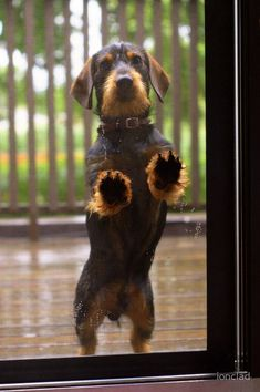 """""""Let me in!"""" Think about the """"story"""" behind this photograph. This is a great shot for inspiring kids to write a paragraph! #dachshund"""