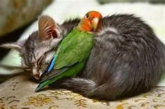 unlikely animal friends ... beautiful!!!!