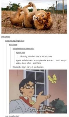 I find this super funny bc I want paying attention and did catch that this wasn't a tiger until it was pointed out. Lol I need sleep.