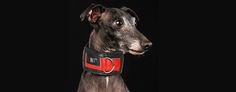 Check our Solid Red Kiss Dog Collar at www.pjays.de