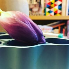 Couché de tulipe #vitra #bouroullec #cloudvasesbouroullec #flower #tulipe #aluminium #eames #decoration #spring #nature #iphone6s #igersfrance #design #designer #france