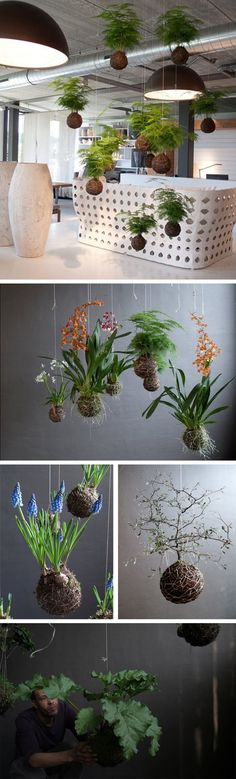 how to make hanging plants