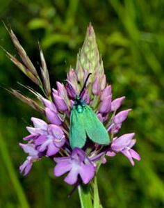 Orchidée et papillon - ARIEGE FRANCE - GEO communauté photo