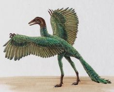 I swear this is what attacked me! I thought it was a peacock roided out, but No it was an Archaeopteryx. lol. Had to be.