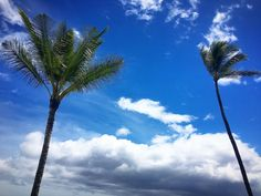 Wishing we were sitting under these trees!  Have an amazing week everyone!  #WaileaMaui #PalmTrees #Beach