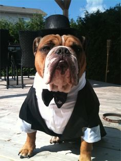 Dress Bohdi Up In A Tux And Axel For The Save
