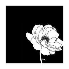 Valkoisia kukkia (dekoratiivinen taide) Poster AllPosters.fi-sivustossa